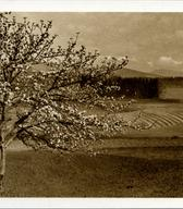 Velikonočna voščilnica, založnik Vekoslav Kramarič, 30. – 40. leta 20. stoletja